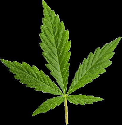 https://flashseedsbank.com/wp-content/uploads/2018/12/marijuana_leaf_large-2.png